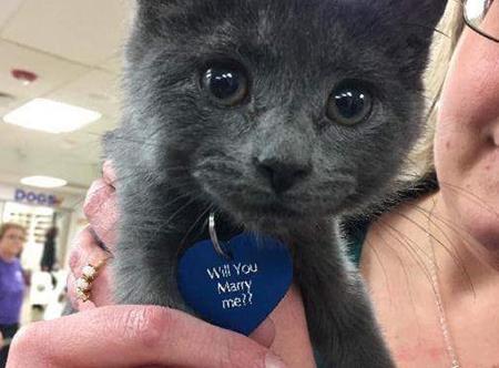 Chú mèo Gandalf và thông điệp dễ thương trên cổ