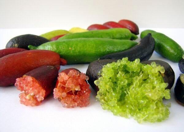 Chanh ngón tay có vị chua ngọt đặc biệt và giá khá đắt đỏ