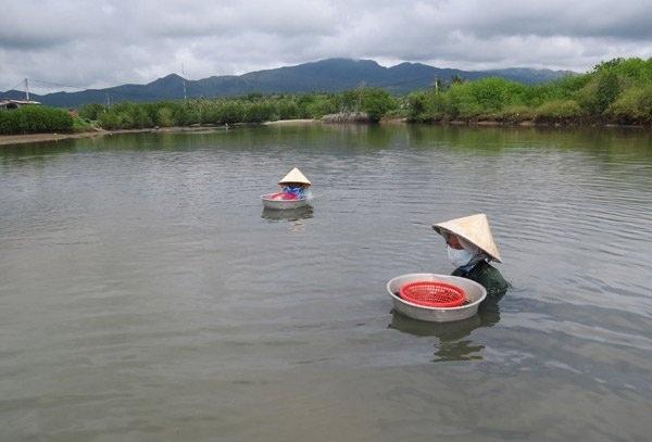 Không ít người phụ nữ phải ngâm mình dưới con lạch chảy ra vịnh Xuân Đài, nước ngập tới cằm để mò bắt sò. Ảnh: Mạnh Hoài Nam