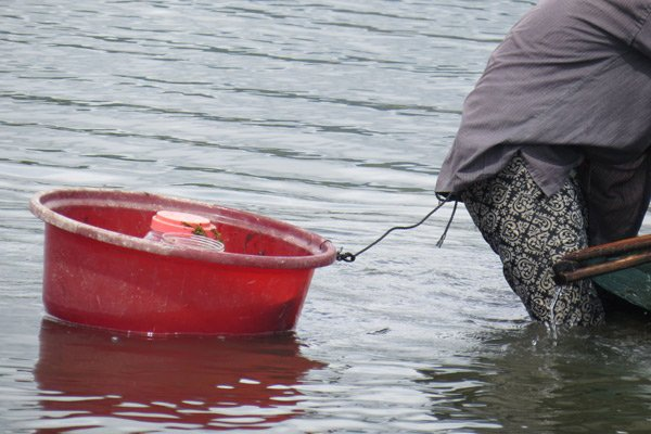 Để bắt cá mú, người dân dùng sợi dây bao cột vào vành thau, đầu kia cột vào lai áo, đi đến đâu kéo thau đến đó. Trong thau đặt lọ nhựa đựng cá mú con, sợ cá nhảy ra ngoài. Ảnh: Mạnh Hoài Nam