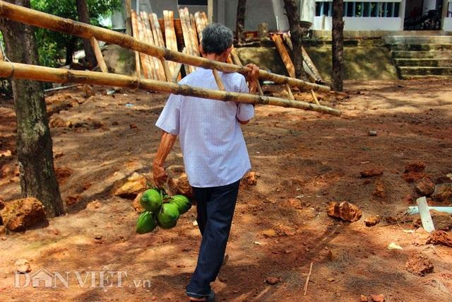 """""""Quá đã"""" vườn dừa xiêm lùn siêu ngọt trĩu trái nằm sát biển - 6"""
