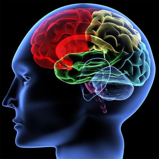 10 sự thật về bộ não của trẻ vị thành niên - 3