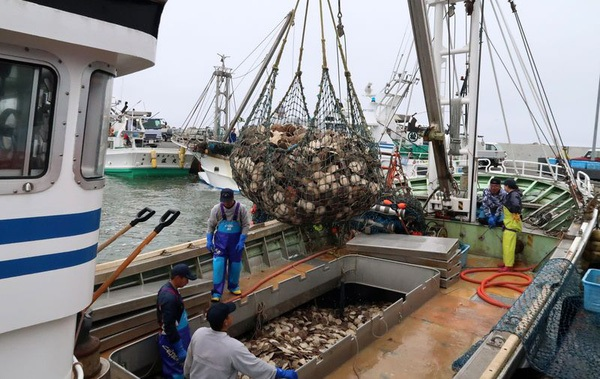 Một tàu đánh bắt sò về đến cảng ở làng Sarufutsu, Hokkaido, Nhật Bản - Ảnh: Bloomberg.