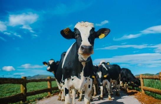 Bước tiến mới trong lĩnh vực organic của ngành sữa - 5