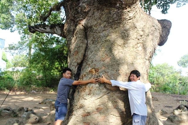 Thân cây mấy người ôm không hết.