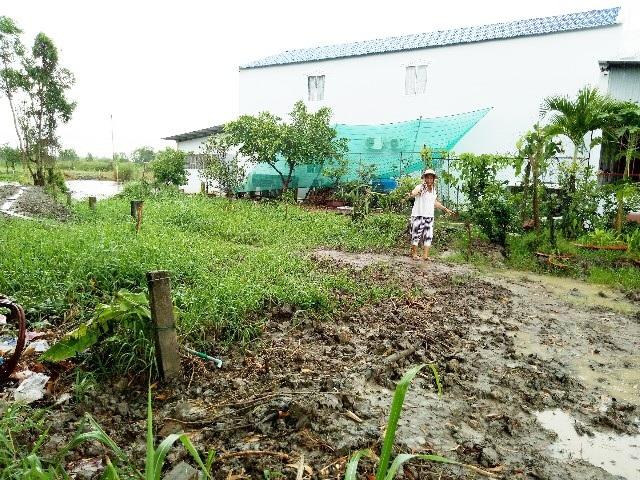 Phần đất trồng cây của gia đình ông Trương Hoàng Ngôi liên tiếp bị người nhà bà Trương Hoàng Anh hủy hoại.