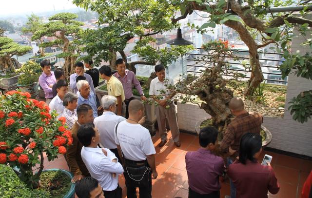 Hàng đoàn khách và giới yêu cây cảnh đã đến chiêm ngưỡng cây ổi quý hiếm độc nhất vô nhị. Ảnh: Gia Thọ