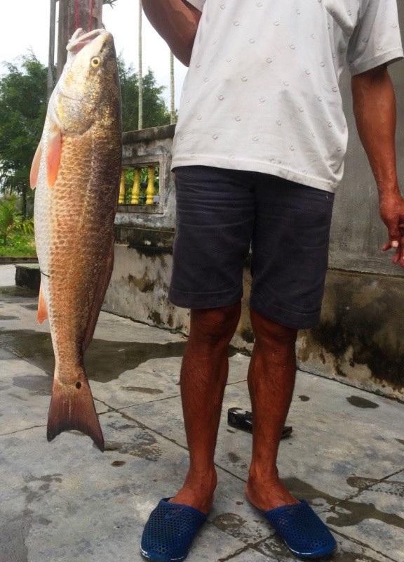 Con cá nặng gần 5kg, nghi cá sủ vàng quý hiếm, được 2 cần thủ ở Bình Định câu được