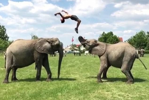 Nghệ sĩ xiếc người Hungary - Rene Casselly Jr - biểu diễn bên hai chú voi thân thiết.