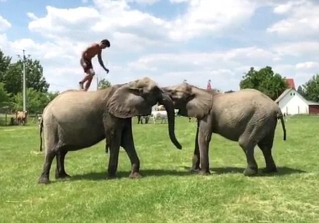 Rene hiện tại đang biểu diễn trong Đoàn xiếc Quốc gia Hungary. Anh thường biểu diễn với các loài động vật, trong đó, Rene gắn bó nhất với hai chú voi của gia đình mình.