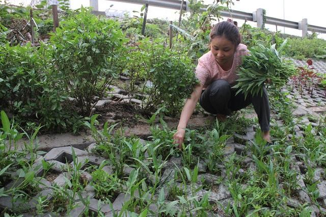 Nhờ vườn rau xanh độc đáo này mà nhiều người dân sống ở khu vực này cho biết họ không phải đi mua rau ngoài chợ.