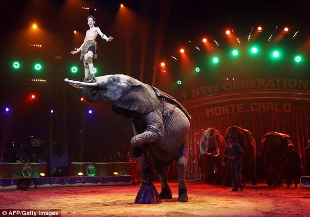 Hiện giờ, ở tuổi 20, Rene đã biểu diễn thành thạo các màn thăng bằng nhào lộn bên những chú voi của gia đình mình.