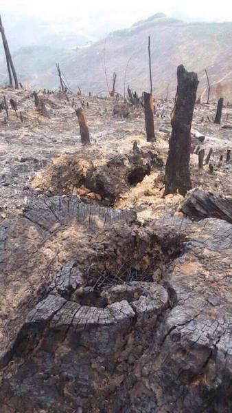 Hiện trường vụ phá rừng nghiêm trọng vừa xảy ra tại huyện Lục Nam.
