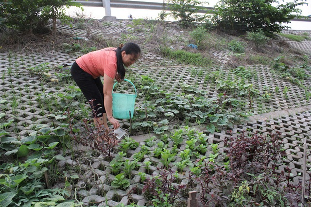 Mỗi hốc bê tông bé bằng nắm tay được người dân bỏ đất, trồng đủ loại rau từ rau ngắn ngày như: rau muống, cải, rau ngót đến các loại củ, quả, su su…