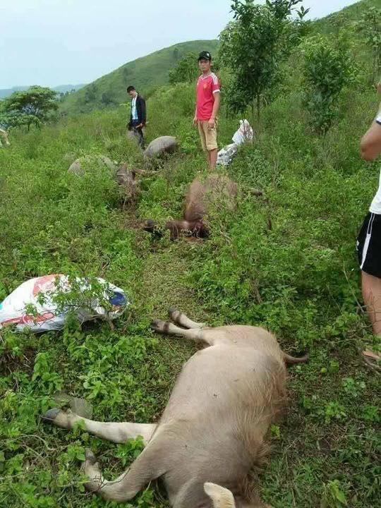 Sét đánh chết 6 con trâu, người chăn bất tỉnh - 2