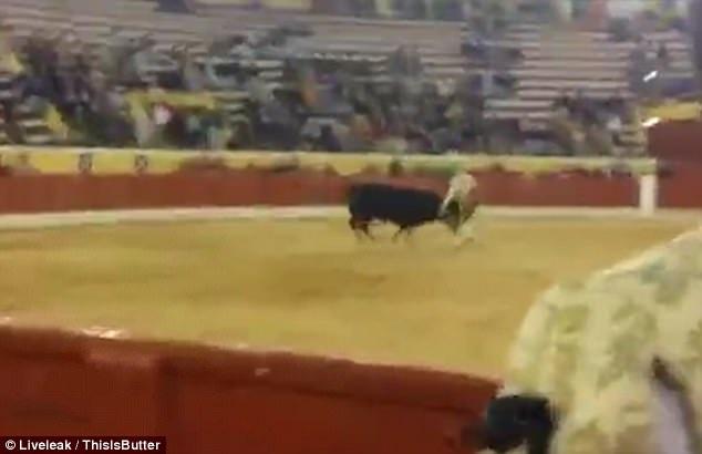 Bò tót tấn công trực diện vào Fernando Quintela rồi lao tiếp vào những người đấu bò còn lại trên sân đấu.