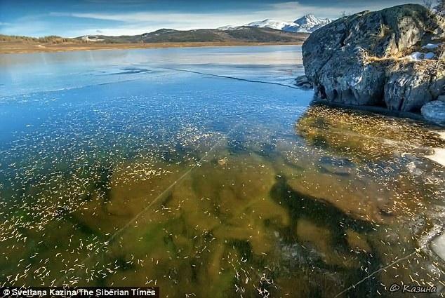 Mặt nước đóng băng trong giá lạnh