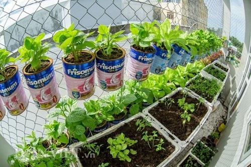 Với điều kiện chật hẹp nhà không có vườn thì việc có những mớ rau xanh tự trồng là cả một vấn đề. Vì vậy, với số diện tích ít ỏi 4m2, anh Biển đã lên mạng tham khảo nhiều diễn đàn về trồng cây ở các nước và sử dụng chính những chiếc vỏ hộp sữa của cậu con trai để chế ra kiểu trồng rau sáng tạo cho vườn chật nhà mình.