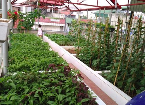 Bên cạnh cách trồng rau vào thùng xốp, khay nhựa vẫn thường thấy, nhiều gia đình ở Hà Nội giờ còn mạnh tay chi cả 100 triệu đồng để xây bồn, luống trồng rau trên sân thượng vừa để bền chắc vừa đảm bảo tính thẩm mỹ cho căn nhà.