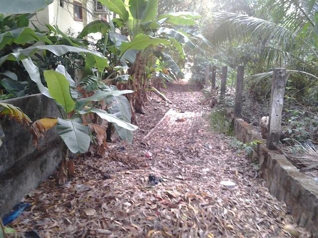 ... và đoạn 3m hiện trở nên hoang tàn như thế này vì sự phớt lờ xử lý của UBND thị trấn Dương Đông.