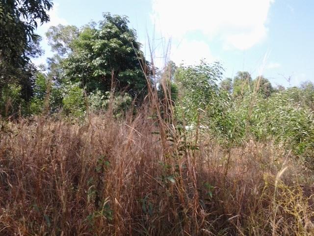 Trong khi đó, dự án của Công ty Hải Lưu vẫn chưa xây dựng công trình gì mà chỉ là một bãi đất cỏ cây um tùm.