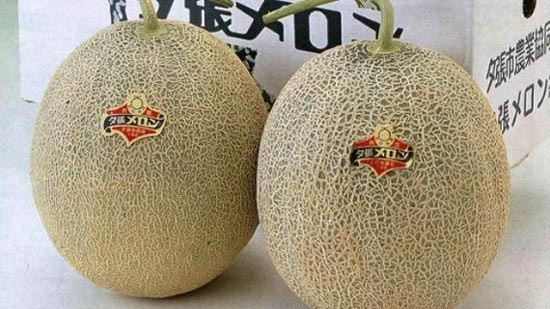 Loại dưa lưới Yubari từng được đấu giá lên tới 3 triệu Yên/cặp