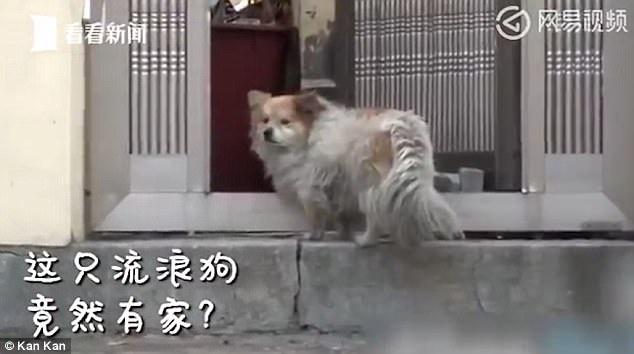 Chú chó Fu Shi đã kiên nhẫn đợi chủ suốt 3 năm bên căn nhà vắng lặng.