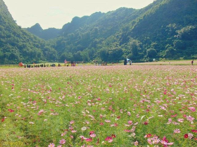 Theo người dân bản địa, cánh đồng hoa rộng khoảng 20ha. Để vào cửa khách du lịch phải mua vé là 40.000 đồng/ lượt.