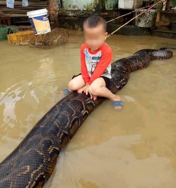 Hình ảnh cậu bé khoảng 3 tuổi cưỡi trên mình con trăn khủng xôn xao cộng đồng mạng những ngày qua (Nguồn: Face book)