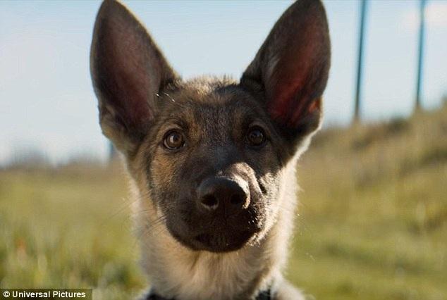 """Chú chó chăn cừu giống Đức xuất hiện trong một cảnh phim của """"A Dog's Purpose""""."""