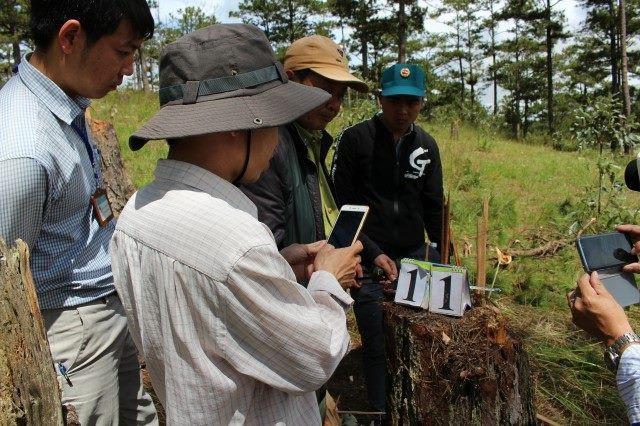Bắt 2 đối tượng phá rừng thông để lấy đất bán - 1