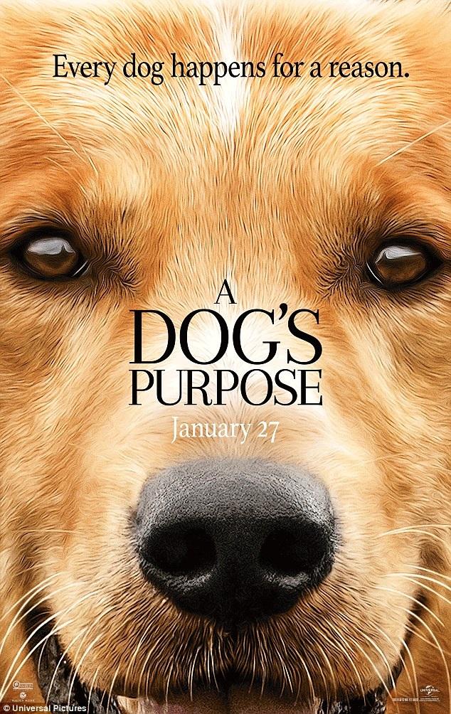 """Bộ phim """"A Dog's Purpose"""" có sự tham gia diễn xuất của 5 chú chó, trong đó nhân vật chính là chú chó Bailey."""