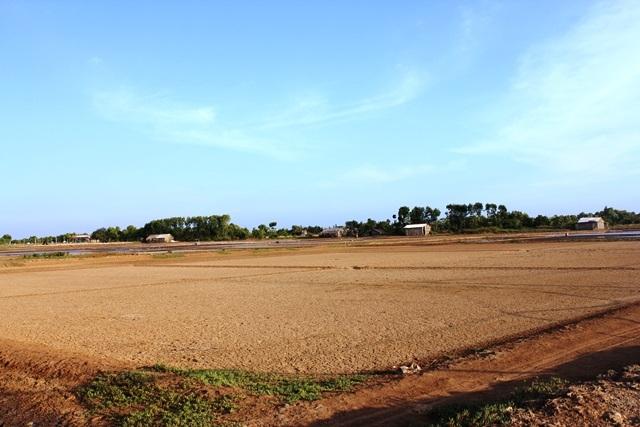 Một số ruộng muối ở huyện Ba Tri (tỉnh Bến Tre) bỏ trống vì năm rồi giá thấp