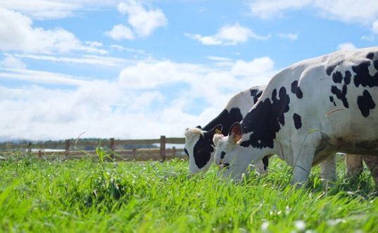 Bước tiến mới trong lĩnh vực organic của ngành sữa - 1