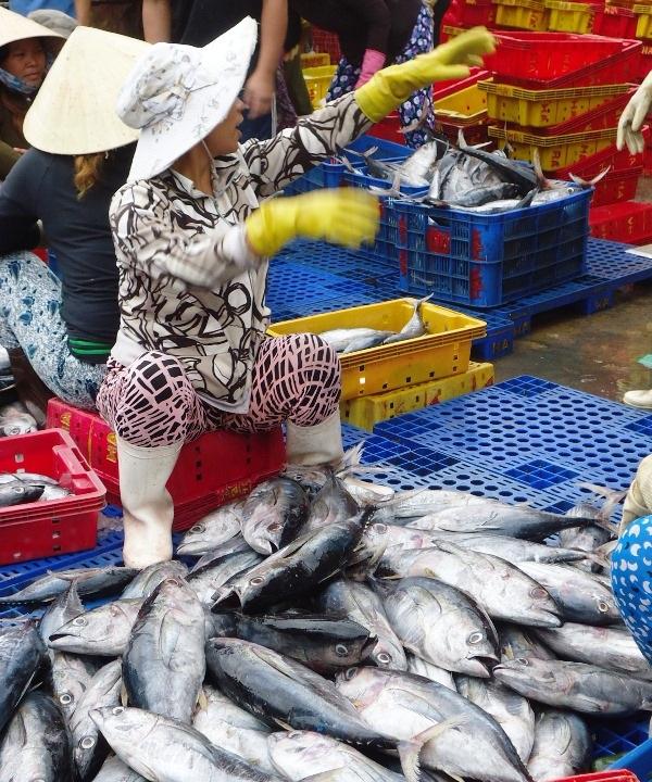 Nhiều tàu cá ngư dân Bình Định cập bến đầy ắp cá, mực các loại