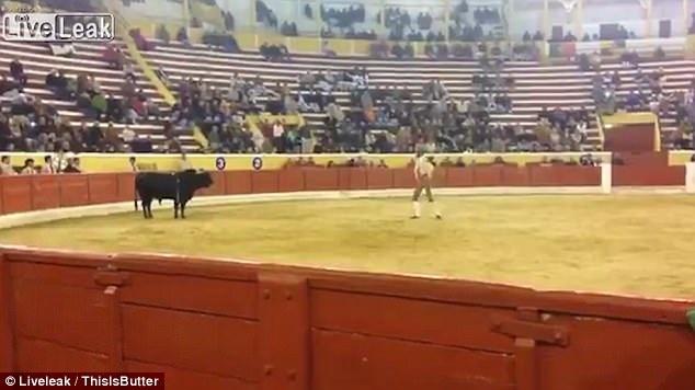 Những hình ảnh trong đoạn clip cho thấy Fernando Quintela là người được cử ra để khiêu khích bò tót.