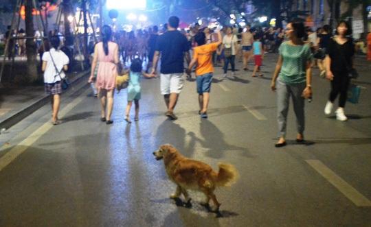Chó ra đường không đeo rọ mõm, chủ sẽ bị phạt từ 600 đến 800 nghìn đồng