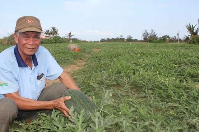 Dưa hấu rớt giá khiến nông dân bị lỗ