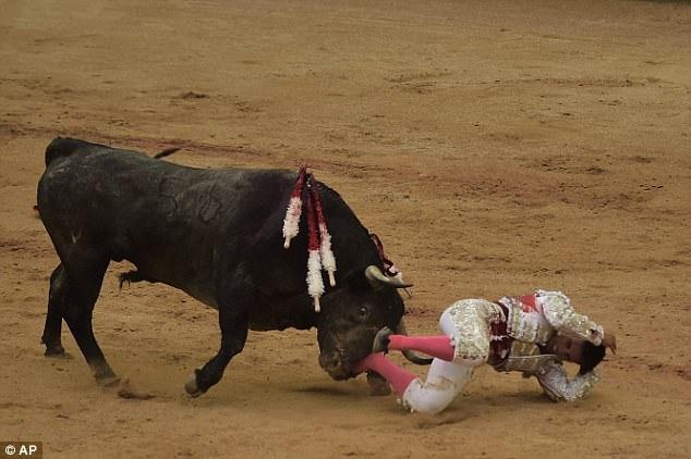 Trong cuộc đấu bò chuyên nghiệp diễn ra vào buổi chiều, người đấu bò Gonzalo Caballero đã bị bò húc và phải dừng cuộc đấu.