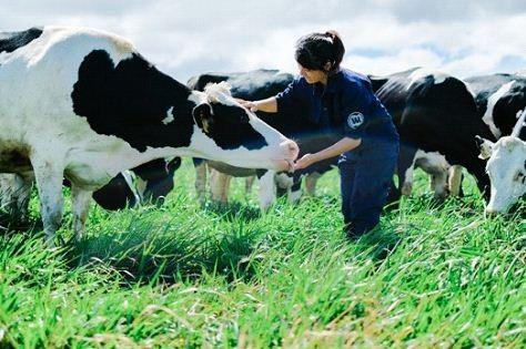 Bước tiến mới trong lĩnh vực organic của ngành sữa - 3