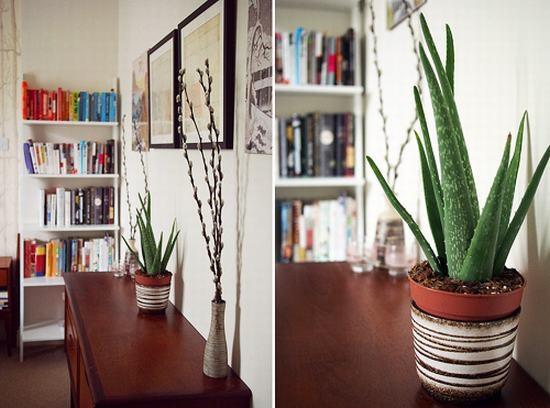 5 loại cây cảnh trồng trong nhà mang lại tài lộc và sức khỏe - 4