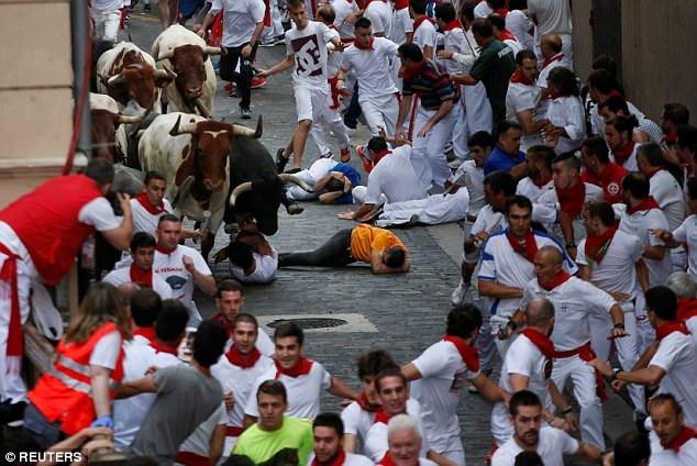 Những con bò tham gia cuộc chạy đua thứ hai đến từ nông trại Jose Escolar. Cuộc chạy kéo dài khoảng 850m mất 4 phút hoàn thành, lâu hơn cuộc chạy ngày hôm qua 1 phút, nguyên nhân là bởi có một con bò tách đàn và bị lạc đường.