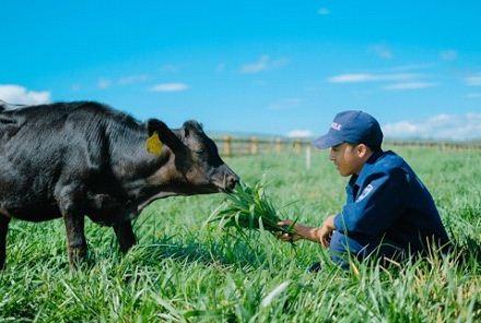 """Những """"cô bò hạnh phúc"""" tại trang trại organic của Vinamilk được chăm sóc đặc biệt theo tiêu chuẩn hữu cơ Châu Âu"""