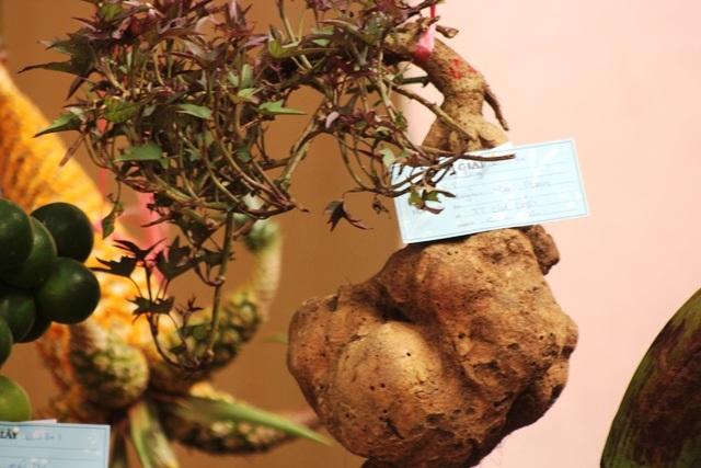 Củ khoai lang nặng 3 kg với hình dáng rất lạ mắt