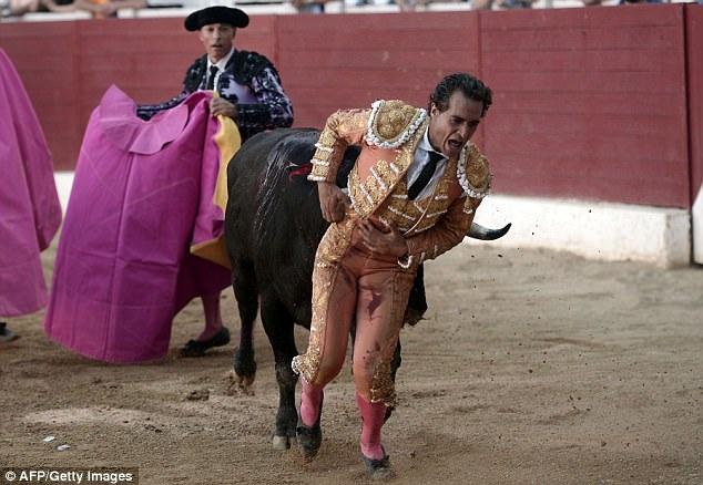 Người đấu bò Ivan Fandino đã vừa qua đời hồi tháng 6 vừa qua trong một cuộc đấu bò.
