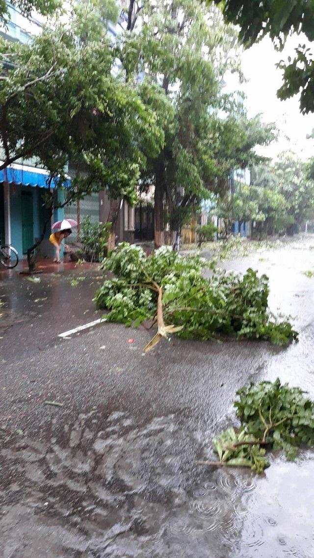 Tỉnh Bình Định không nằm trong tâm bão nhưng cũng bị ảnh hưởng, cây xanh gãy đổ la liệt ở Bình Định (Ảnh: Doãn Công).
