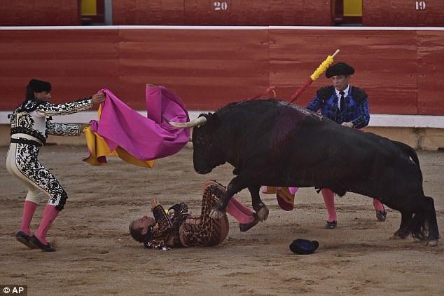 Người hỗ trợ đấu bò nằm trên sân đấu sau cú húc, trong khi những người đấu bò khác tìm cách khiến con bò tót phân tâm.