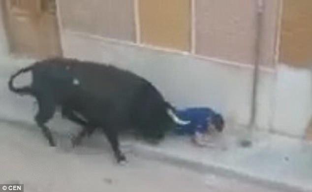Người đàn ông xấu số có tên Amadeo đã bị những vết húc chí tử khi tham gia một cuộc chạy đua với bò tót.