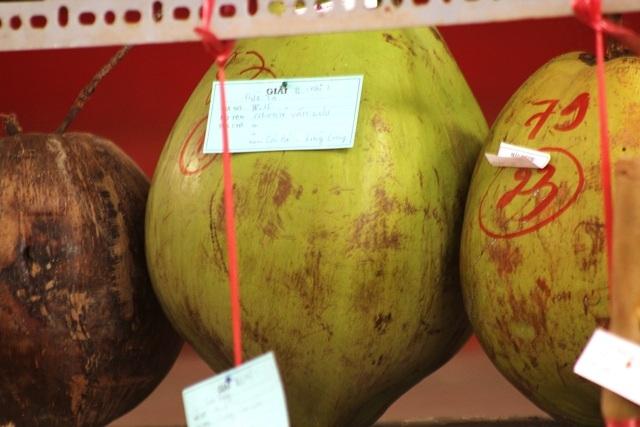 Những quả dừa khủng được trưng bày ở Lễ hội