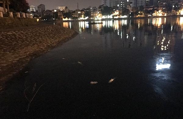 Gần 24h đêm, cá chết vẫn nổi ven hồ Hoàng Cầu
